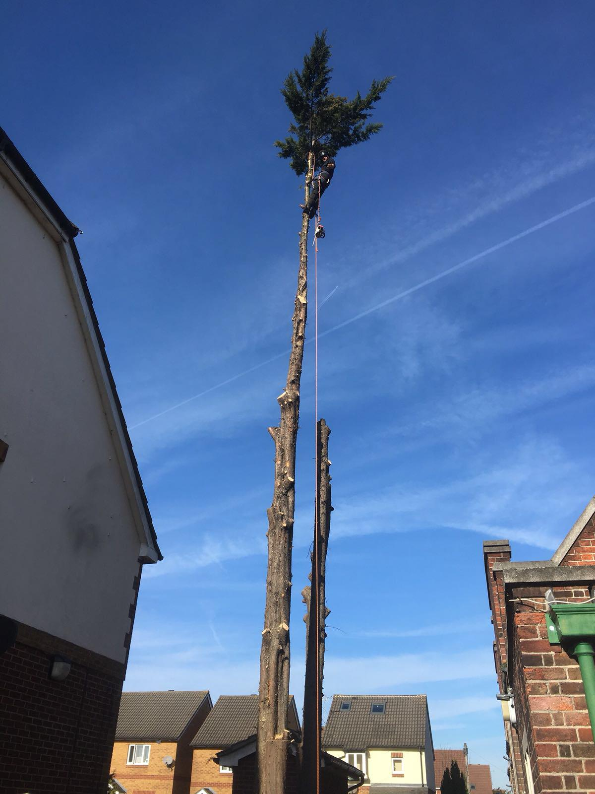 Tree surgery Cheshunt