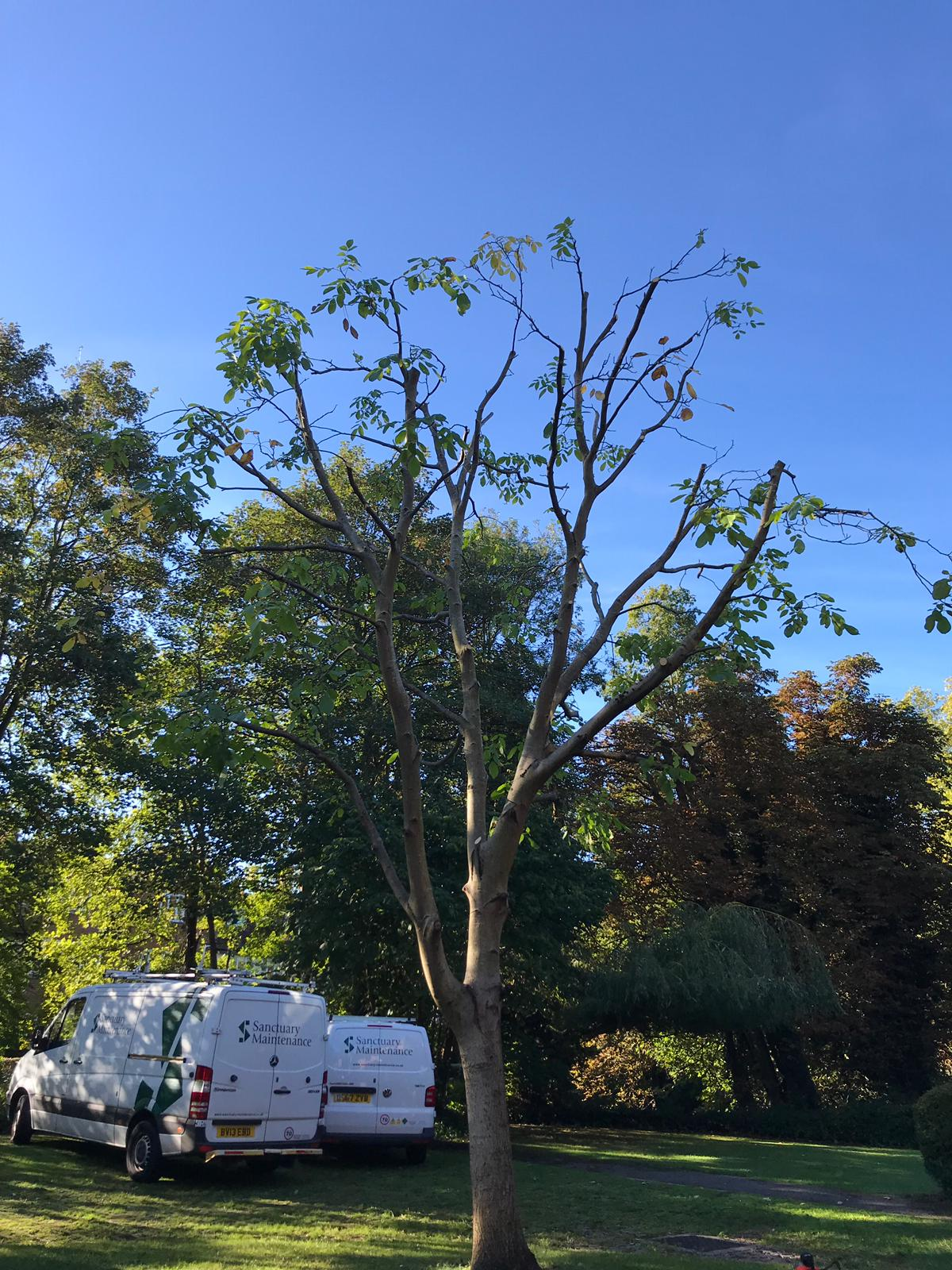 Tree surgery Broxbourne