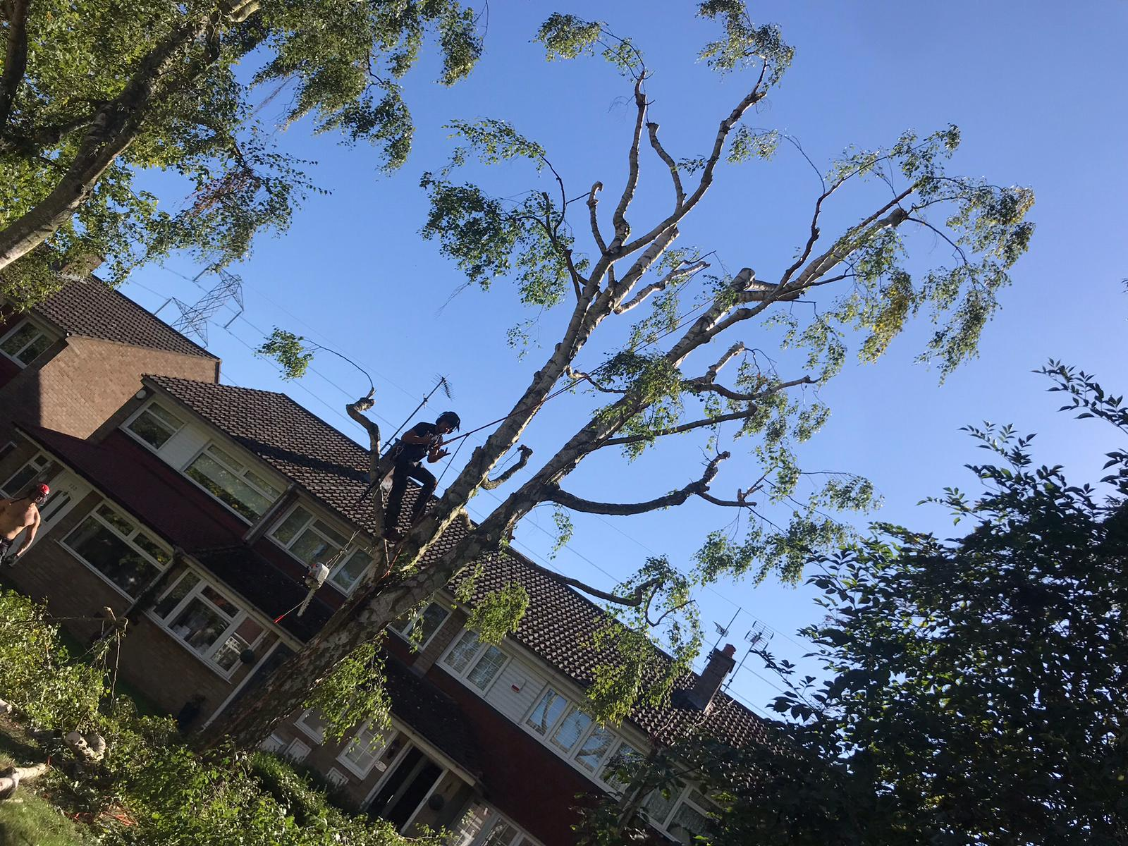 Tree surgeon Broxbourne