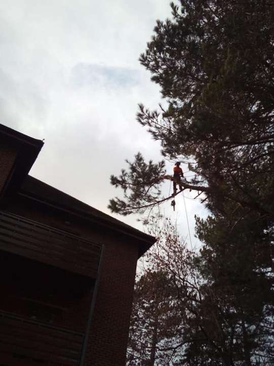 Tree surgeon Cheshunt