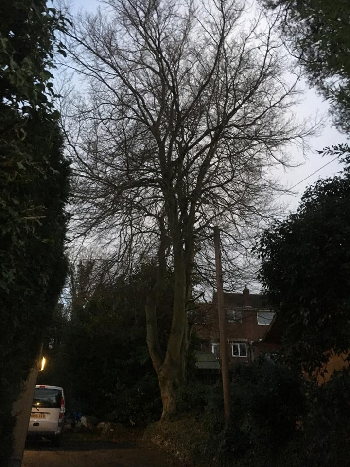 Tree surgery Waltham Cross