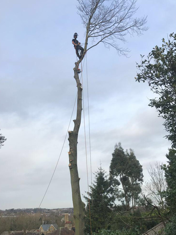 Tree surgeons Broxbourne Hertfordshire